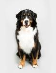 dogs-naturally-jodie-etmanski-photography