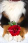 rose2pawsb